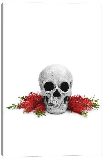 Skull & Bottlebrush Black & White Canvas Art Print