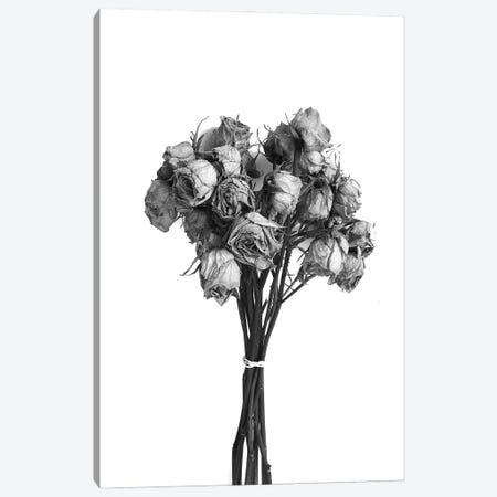 Dried Roses Black & White Canvas Print #JTN16} by Jonathan Brooks Canvas Artwork