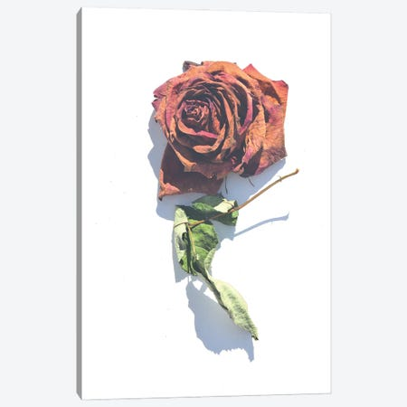 Faded Rose Canvas Print #JTN19} by Jonathan Brooks Canvas Print