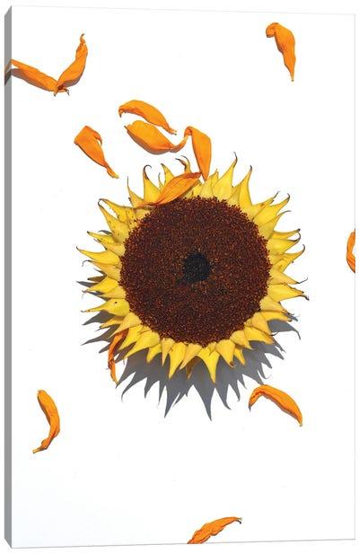 Lost Petals Canvas Art Print