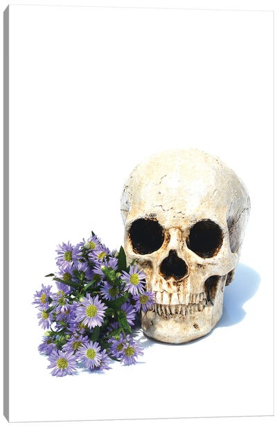 Skull & Daisies Canvas Art Print