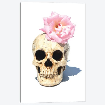 Skull & Pink Rose Canvas Print #JTN44} by Jonathan Brooks Art Print