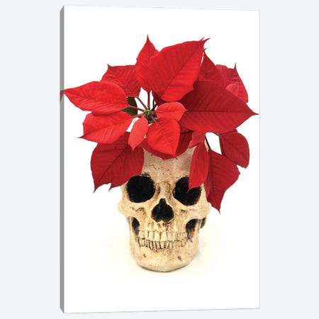 Skull & Poinsetta Canvas Print #JTN46} by Jonathan Brooks Art Print
