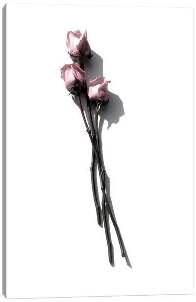 Three Light Pink Roses Canvas Art Print