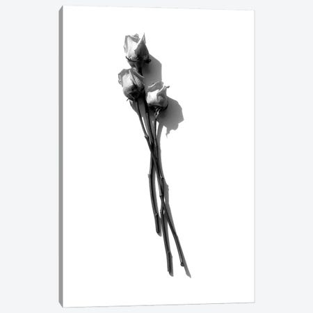Three Light Pink Roses Black & White Canvas Print #JTN62} by Jonathan Brooks Canvas Art