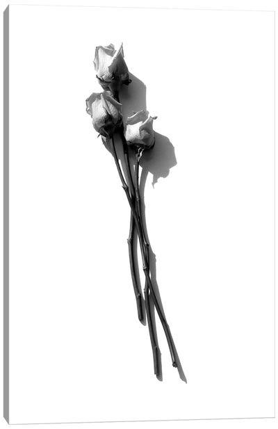 Three Light Pink Roses Black & White Canvas Art Print