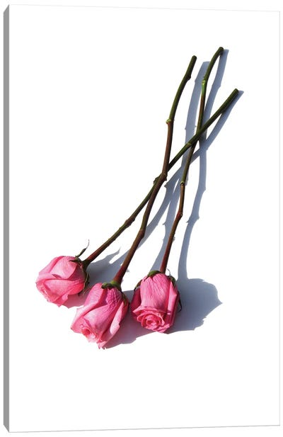 Three Pink Roses Canvas Art Print
