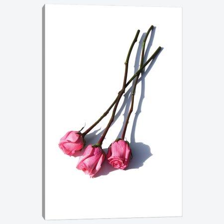 Three Pink Roses Canvas Print #JTN63} by Jonathan Brooks Canvas Wall Art