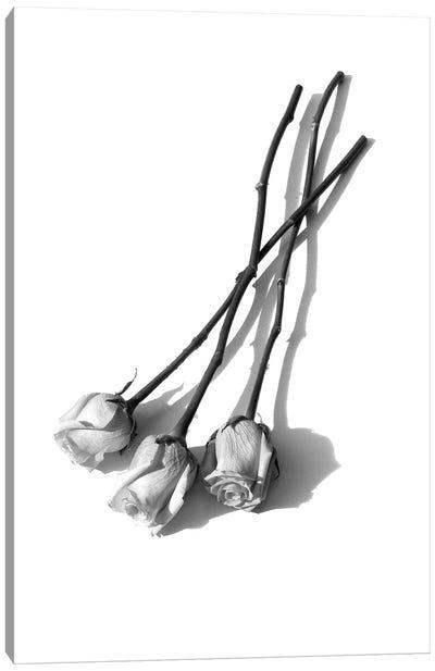 Three Pink Roses Black & White Canvas Art Print