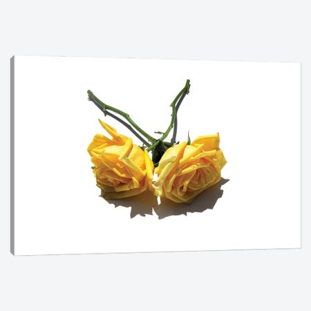 Two Yellow Roses Canvas Print #JTN67} by Jonathan Brooks Canvas Print