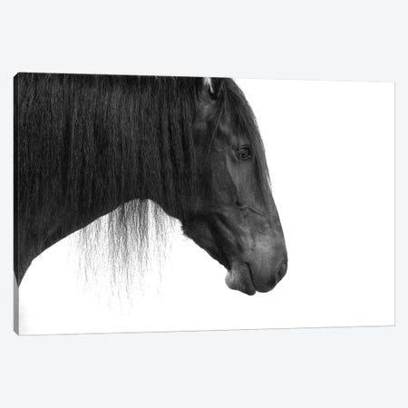 Happy Horse Canvas Print #JTN73} by Jonathan Brooks Canvas Art Print