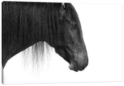 Happy Horse Canvas Art Print