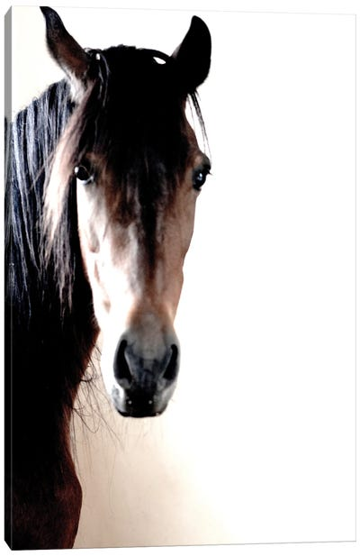 In The Stable Canvas Art Print
