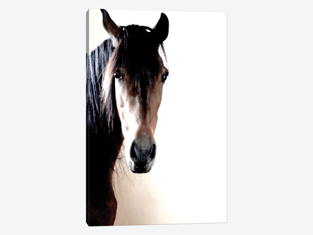 In The Stable by Jonathan Brooks 1-piece Canvas Art Print