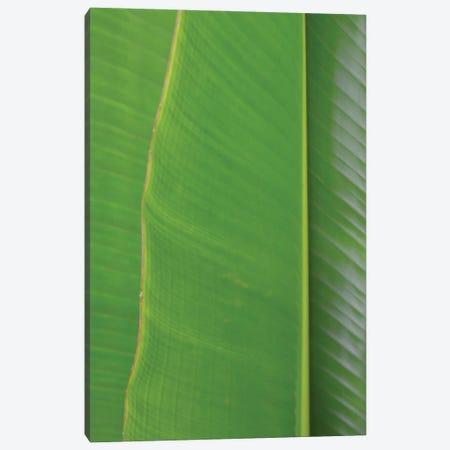 Traveller's Palm Canvas Print #JTN84} by Jonathan Brooks Canvas Art Print