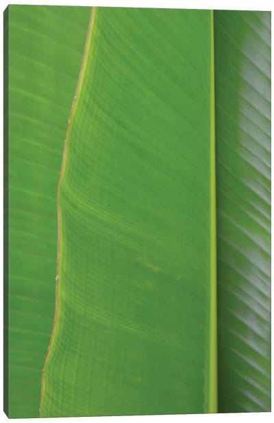 Traveller's Palm Canvas Art Print