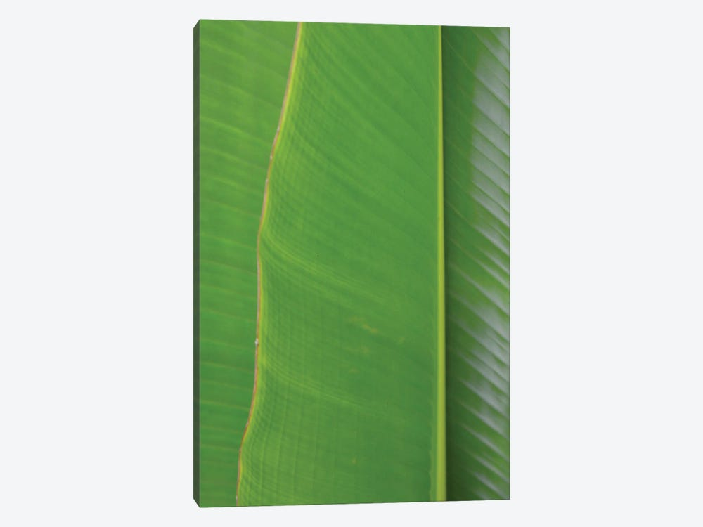 Traveller's Palm by Jonathan Brooks 1-piece Canvas Wall Art