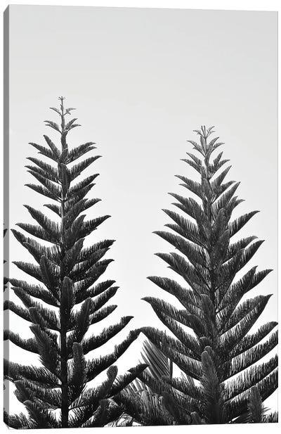 Whispering Pines Canvas Art Print