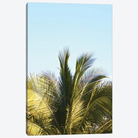 Palm Splash Canvas Print #JTN87} by Jonathan Brooks Canvas Print