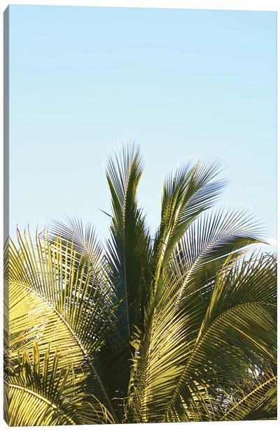 Palm Splash Canvas Art Print