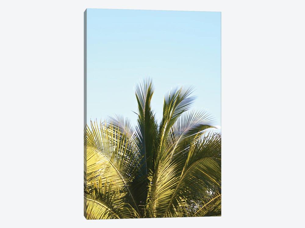 Palm Splash by Jonathan Brooks 1-piece Art Print