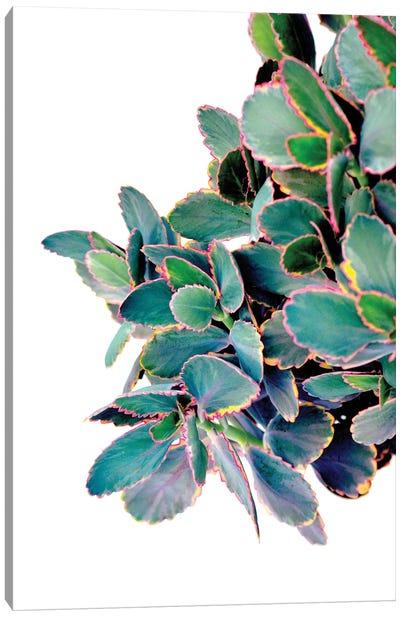 Succulents Canvas Art Print
