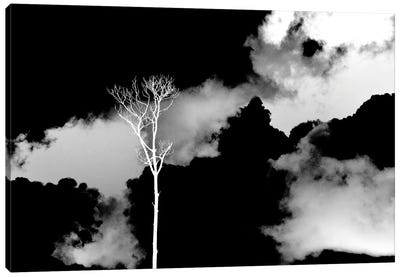 Black Sky, White Tree Canvas Art Print