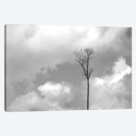 Grey Sky, Black Tree Canvas Print #JTN92} by Jonathan Brooks Canvas Print