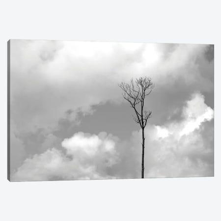 Grey Sky, Black Tree Canvas Print #JTN92} by Jonathan Brooks Canvas Print