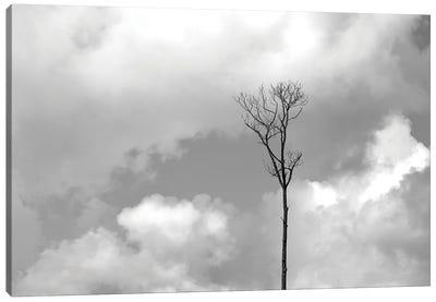 Grey Sky, Black Tree Canvas Art Print