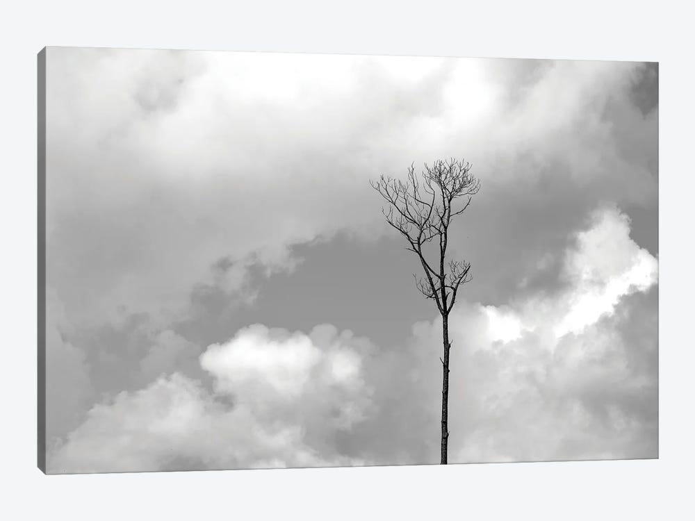 Grey Sky, Black Tree by Jonathan Brooks 1-piece Canvas Art Print