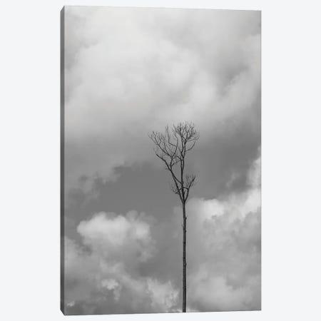 Grey Sky, Grey Tree Canvas Print #JTN93} by Jonathan Brooks Canvas Art Print