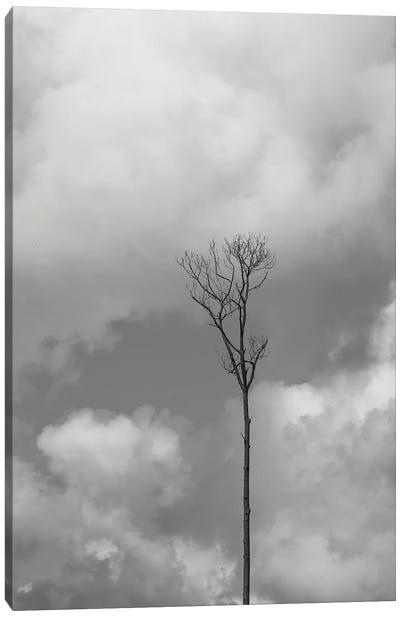 Grey Sky, Grey Tree Canvas Art Print
