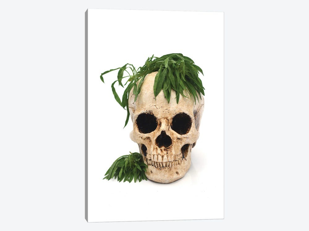 Skull & Weed by Jonathan Brooks 1-piece Canvas Print