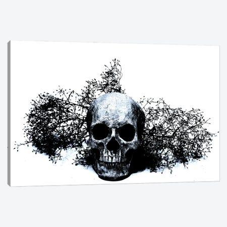 Black & Blue Skull II Canvas Print #JTN9} by Jonathan Brooks Canvas Art Print