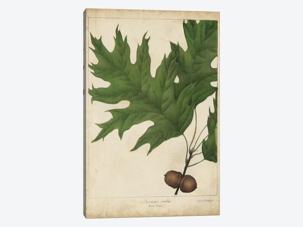 Oak Leaves & Acorns II by John Torrey 1-piece Canvas Art