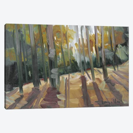 Backlit Woods   Canvas Print #JTR31} by Jose Trujillo Canvas Print