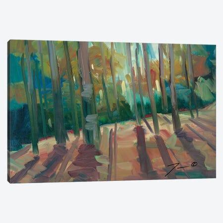 Backlit Woods Canvas Print #JTR4} by Jose Trujillo Canvas Art Print
