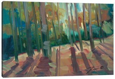 Backlit Woods Canvas Art Print