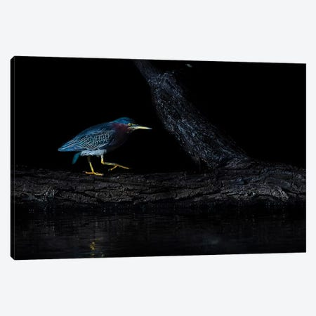 Green Heron Canvas Print #JTS2} by Judy Tseng Art Print