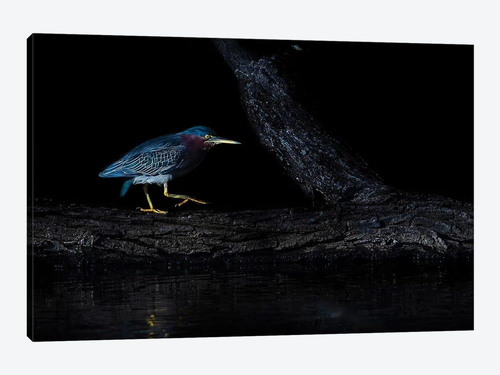 Green Heron by Judy Tseng 1-piece Art Print