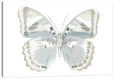 Butterfly In Mandarin Canvas Art Print