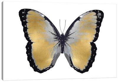 Butterfly In Metallic I Canvas Print #JUL12