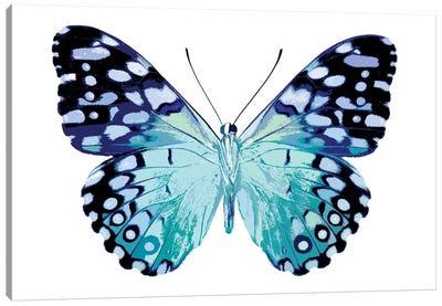 Butterfly In Metallic II Canvas Art Print