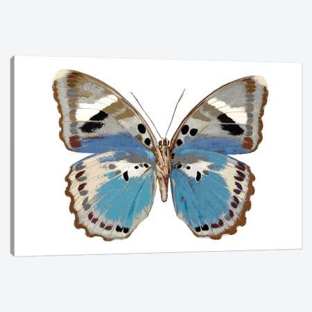 Butterfly In Pink I Canvas Print #JUL14} by Julia Bosco Canvas Art Print
