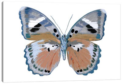 Butterfly In Pink II Canvas Print #JUL15