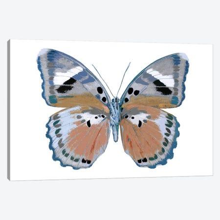 Butterfly In Pink II Canvas Print #JUL15} by Julia Bosco Art Print