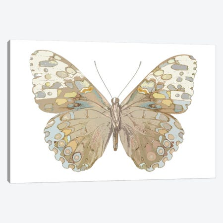 Butterfly In Taupe And Blue Canvas Print #JUL16} by Julia Bosco Art Print