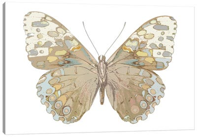 Butterfly In Taupe And Blue Canvas Art Print