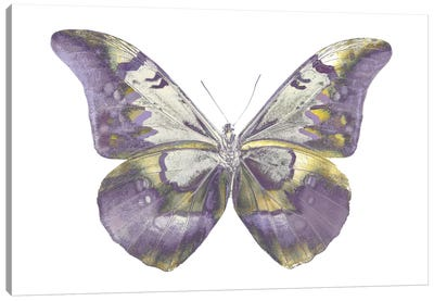 Butterfly In Teal And Blue Canvas Art Print